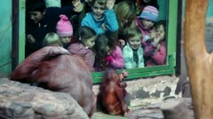 Children watch on female orangutan with baby sit in front of fencing glass in Stock Footage
