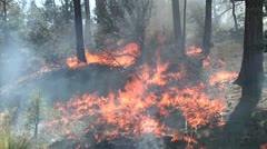 Roadside fire creeping into the forest close up Stock Footage