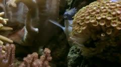 Underwater fish saltwater Stock Footage