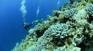 Stock Video Footage of 110612l scuba divers drift in current close to coral reef