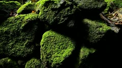 POV moving past rocks and moss and lichen in a rainforest. - stock footage