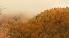 Foggy forest in the mountains. Stock Footage