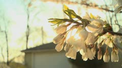 Stock Video Footage of spring blossom 6