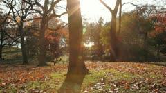 Autumn park. Stock Footage