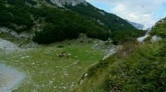 Herd animals on the mountain Stock Footage