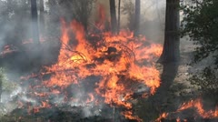Forest fire close up Stock Footage
