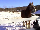 Horse and Pony in snow Stock Footage