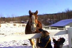 Horse and Pony, feed me Stock Footage