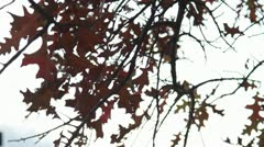 Fall Leafs Overcast Weather Stock Footage