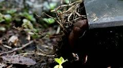 Snail Closeup Under the Pot Stock Footage