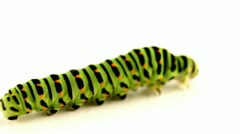 Crawling caterpillar Stock Footage