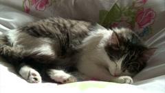 Sleeping Norwegian forest cat 4 Stock Footage