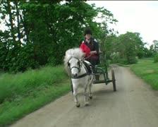 Shetland pony pulling carrage on road Stock Footage