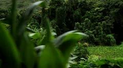 POV liikkuvat pitkin kautta viherkasveja ja viidakon. Arkistovideo