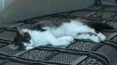 Sleeping Norwegian forest cat 16 Stock Footage