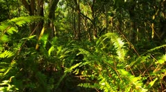 POV moving through a jungle or rainforest. Stock Footage