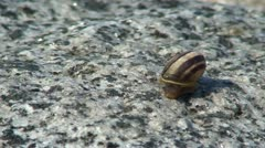 Shell (Marisa comuarietis) on a stone 4 Stock Footage