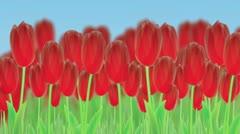 tulips panorama - stock footage