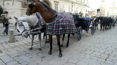 Horses, carriage, Vienna. Austria. 1 - stock footage