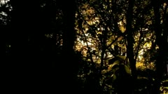 Driving through trees - stock footage