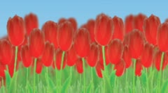 tulips panorama - stock after effects