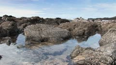 Rocky Tide pools - stock footage