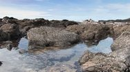 Stock Video Footage of Rocky Tide pools