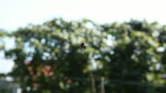 Stock Video Footage of Dangerous Spider in Web Waiting, Close-Up, Araneae, Arthropods, Venom