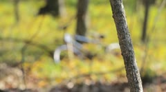 Old bike in the woods - rack focus Stock Footage