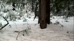 Deer In Snowy Mountain Forest Stock Footage