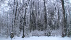 Snow in trees with train whistle in background - stock footage
