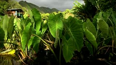 Stationary shot of a field on a tropical island. Stock Footage