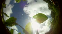 POV from the bottom of a pond, pool or stream with leaves floating on top and Stock Footage