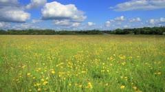 Irish Field of Wildflowers GFHD Stock Footage