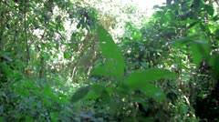 Walking in the Jungle Stock Footage