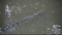 Crocodile_LDA N 00387 Stock Footage