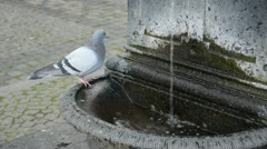 Urban pigeon and street fountain Stock Footage