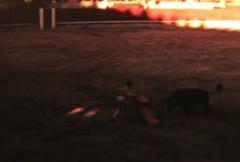 Bullfight In Spain (Archival 1952) Stock Footage