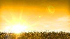 Sunset, wheat grass field & sky Stock Footage