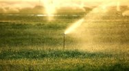 Sprinkler at sunset on a farm Stock Footage
