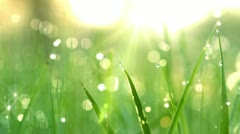 Dew drops in lights on green grass. shot with slider. Stock Footage