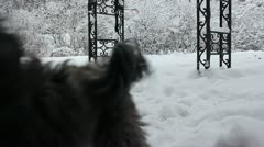 Playful dog and old dog in the snow Stock Footage