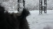 Stock Video Footage of Playful dog and old dog in the snow