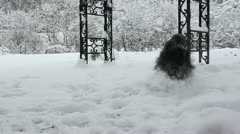 Dog frolics in snow - stock footage