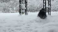 Stock Video Footage of Dog frolics in snow