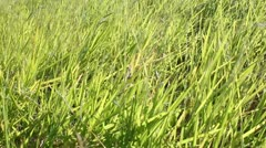Stock Video Footage of green grass