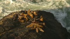 Sea lions on rocky shore, good surf coming in Stock Footage