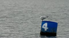 Seagull on floating marker bouy Stock Footage