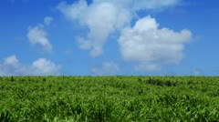 green field and blue sky with clouds - stock footage