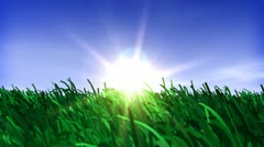 Sunset field of green grass Stock Footage